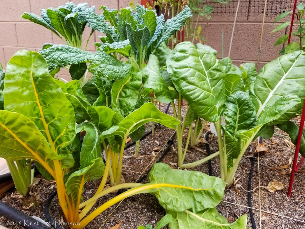 July Greens - Kale and Chard