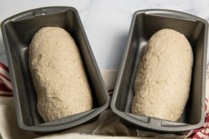 formed loaves ready to rise