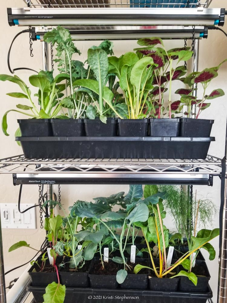 seedlings on grow rack