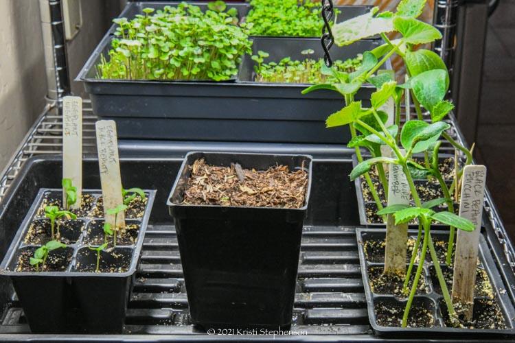planting trays